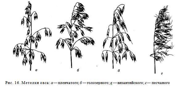 Выращивание ячменя, основные принципы ухода, описание сортов, уборка и хранение — Cельхозпортал